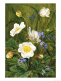 Anemones and Forget-Me-Nots Giclee Print by Maria Krabbe