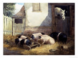Family of Pigs Giclee Print by John Frederick Herring I