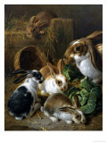 Feeding Time Giclee Print by Alfred Barber
