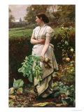 Picking Turnips Giclee Print by Robert Crawford