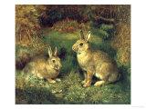 Lapins Impression giclée par Henry Carter