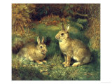 Rabbits Giclee Print by Henry Carter