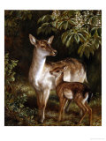 Doe with Her Fawn Giclee Print by Samuel John Carter