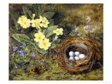 Primevères avec un nid d'oiseau Reproduction procédé giclée par H. Barnard Grey