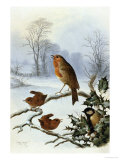 Christmas Robin and Friends Lámina giclée por Harry Bright