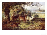 Deer in the Shade Giclée-Druck von Joseph Denovan Adam