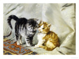 The Introduction: Silver and Ginger Kittens Giclee Print by Julius Adam
