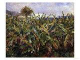 Banana Plantation, c.1881 Prints by Pierre-Auguste Renoir