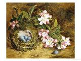 Apple Blossom and a Bird's Nest Giclée-trykk av H. Barnard Grey