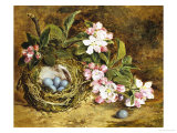 Apple Blossom and a Bird's Nest Giclee Print by H. Barnard Grey