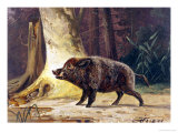 Study of a Fierce Boar in the Forest Giclee Print by Theodore Kiellerup