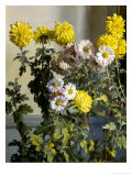 Chrysanthemums Giclee Print by Harald M.h. Holm