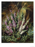 Still Life of Heather and Butterflies Gicl&#233;e-Druck von Albert Lucas
