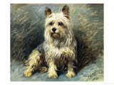 Yorkie Giclee Print by John Emms