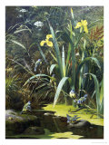 Woodland Pool Giclee Print by Olaf August Hermansen