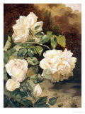 Roses Giclee Print by Alexandre Debrus