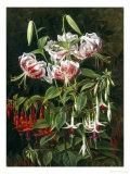 Rubrum Lilies and Fuchsias Giclee Print by Johan Laurentz Jensen
