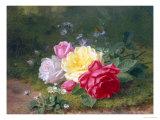 Daisies and Roses Reproduction procédé giclée par Jules Medard