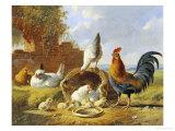 Spring Chickens Giclee Print by Albertus Verhosen