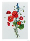Botanical Study of Poppies, c.1850 Giclee Print