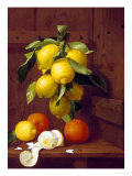 Still Life of Lemons and Oranges Giclee Print by A. Menasque