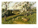 Spring Lambs Giclee Print by Arthur Walker Redgate