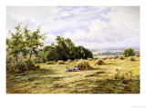 Hampshire Cornfield Giclee Print by Henry Parker