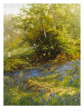 Nature's Carpet Giclee Print by John Noel