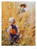 The Poppy Field Reproduction procédé giclée par Percy Tarrant