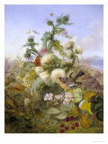 Nature's Glory Reproduction procédé giclée par John Wainwright