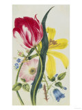 Still Life of Lily, Rose, Harebell and Tulip Giclee Print