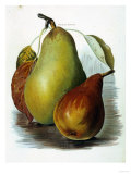 Study of Pears Giclee Print