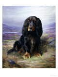 Spaniel in the Highlands Gicléetryck av Lilian Cheviot