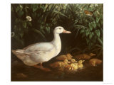 New Brood Giclee Print by Edward Neale