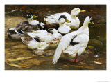 Ducks by the River Reproduction procédé giclée par Alexander Max Koester