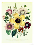 Hibiscus Moscheutos and Lavatera Treloba Giclee Print