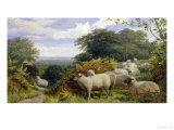 High Pasture Giclee Print by G. Shalders