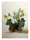 Study of Gourds and Flowers Reproduction proc&#233;d&#233; gicl&#233;e par Pieter Withoos