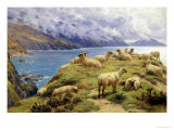 Sheep Reposing, Dalby Bay, Isle of Man Giclee Print by Basil Bradley