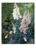 Still Life of Foxgloves Giclee Print by Mary Margetts