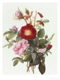 Still Life with Roses Giclée-tryk af Georgius Jacobus J. van Os