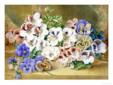 Still Life of Pansies and Pelargoniums Giclee Print by Thomas Collier