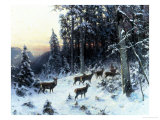 Deer in a Snowy Wooded Landscape Giclee Print by Arthur Julius Thiele