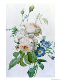 Rosa Damascena Giclee Print by Pierre-Joseph Redout&#233;