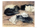 Kittens Giclee Print by Henriette Ronner-Knip