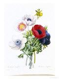 Anemone Simplex Giclee Print by Pierre-Joseph Redouté
