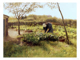 The Cabbage Patch Giclee Print by Anton Mauve