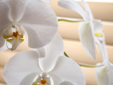 White Orchids III Prints by Nicole Katano