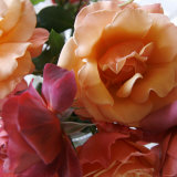 Rose Bouquet Close Up II Prints by Nicole Katano
