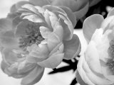 Delicate Blossom Foto von Nicole Katano